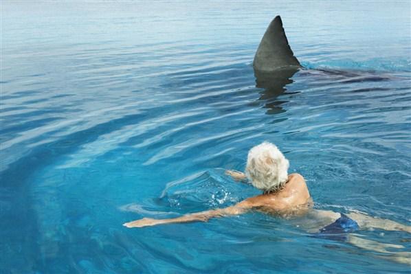 S ance 5 bis quoi sert le hors champ ciclic - Dessiner un requin blanc ...